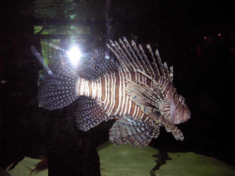 Aquarium World Funny Images Gallery